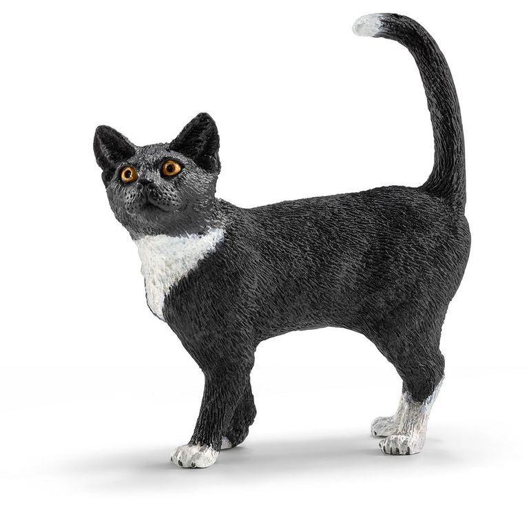 Кошка, стоит купить бурманская кошка в омске