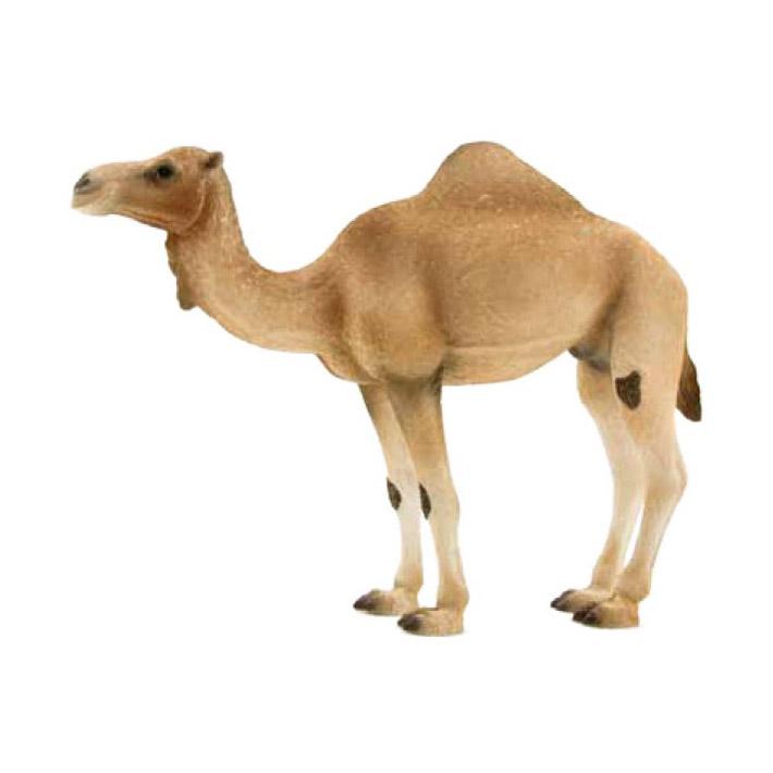 387113 (Animal Planet)-Одногорбый верблюд (XL)Фигурка одногорбый верблюд знакомит детей с окружающим миром, развивает творческие способности и расширяет возможности ролевых игр. Дети могут создать из фигурок свой зоопарк, собрать коллекцию северных и южных животных, построить ферму, посетить фантазийный парк Юрского периода, все фигурки выполнены из высококачественных материалов с максимальной точностью и раскрашены в ручную. Великолепно выполненные и раскрашенные вручную животные, созданные при тесном сотрудничестве с Берлинским зоопарком, никого не оставят равнодушными. В разработке каждой фигурки компания MOJO опирается на исследования в области педагогики, создавая маленькие шедевры для маленьких ручек. Фигурки изготовлены из полимерного материала, не токсичны и не вызывают аллергии<br>