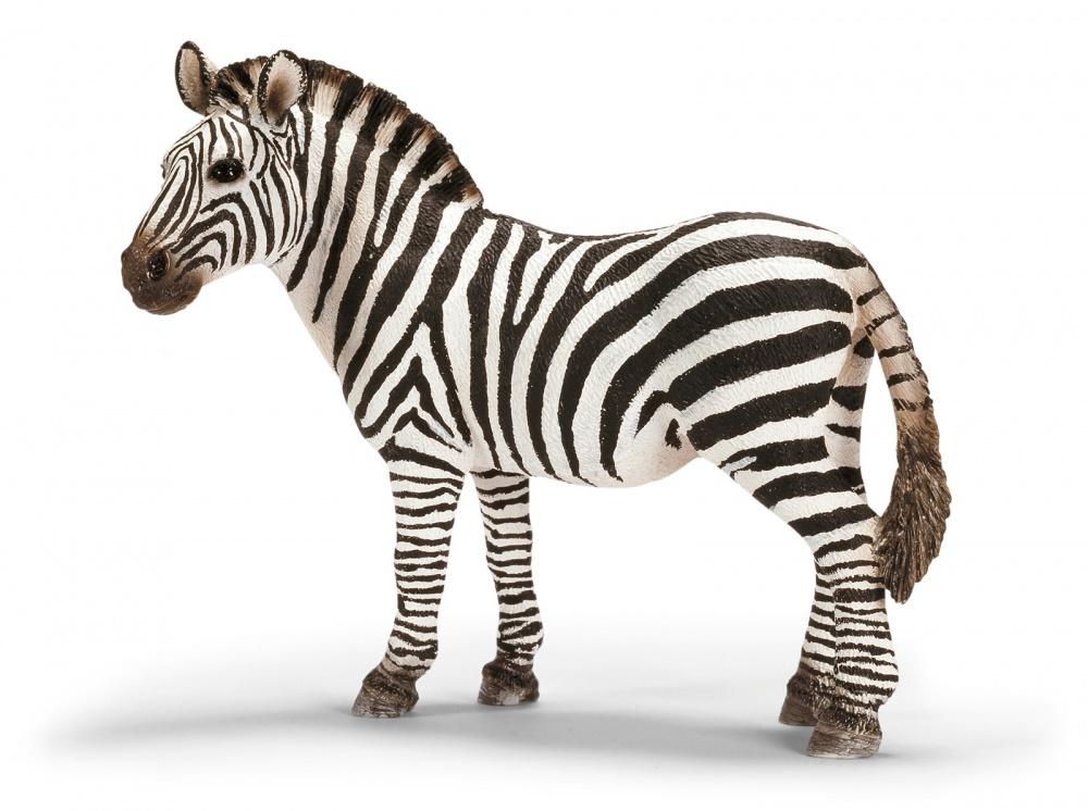 Зебра, самкаФигурка зебры отлично подходит для коллекционирования или для ситуационно-ролевых игр. Представленная модель прекрасно детализирована и окрашена вручную, благодаря чему достигается высокий уровень реализма. Это позволит вашему ребенку разыгрывать множество интересных сюжетов и историй.Особенности материаловФигурка изготавливается из специального пластика, который отличается высокой устойчивостью к случайным повреждениям. Структура материала экологически чиста, что делает игрушку безопасной для здоровья ребенка. Пластик не вызывает аллергических реакций и раздражений организма.Где купить понравившуюся фигуркуВы можете приобрести фигурку зебры в одном из наших розничных магазинов в Москве или Санкт-Петербурге. Также у вас есть возможность сделать заказ через сайт и оформить доставку в любой регион России.<br>